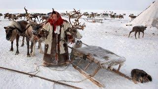 吃生肉的民族!生活在雪橇车上的涅涅茨人【寰球大百科161】