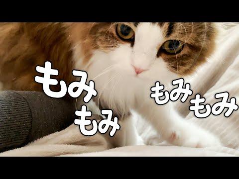 朝から念入りなマッサージをして家族を起こす猫