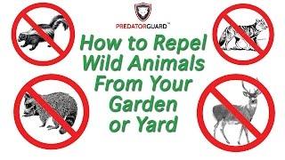 Predator Guard Deterrent Lights - How To Repel Deer, Coyote, Raccoon, Skunk