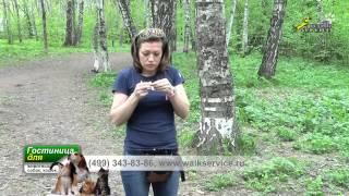 Дрессировка собак, Чем тренировать собаку вкусняшка из зоомагазина или колбаса