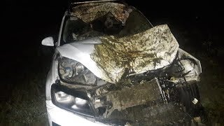 Лошадь залетела в салон: в Башкирии водитель внедорожника сбил животное