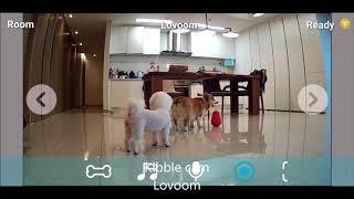 Best interactive pet camera   Dog reaction #7   pet gadget