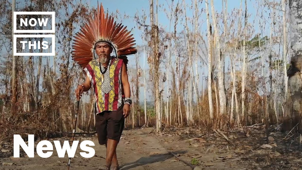 How Indigenous Tribes Are Threatened by the Amazon Rainforest Fires | NowThis