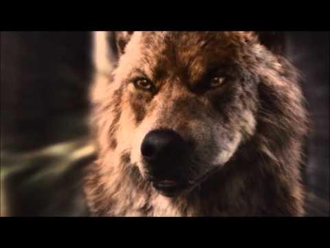 фото волк джейкоб