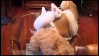 Милый кролик пытается трахнуть собак