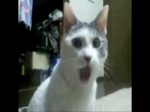 оперативным гифка кошка удивлена дома оформлен