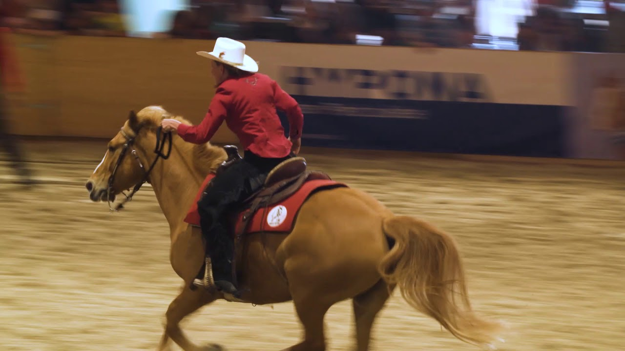 Pferde Show