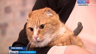 Единственный в мире кот с титановыми лапами живет в Новосибирске