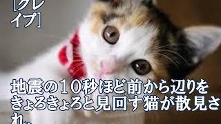 「何か来るにゃ   」 大阪地震の
