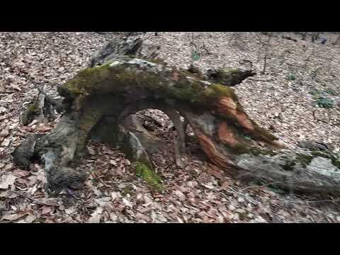 Прогулки по Осетии-Алании: Царануат (Чареб)