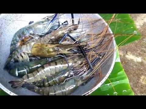 Big prawns | Indian Prawns Cleaning and Cutting Malayalam # 118