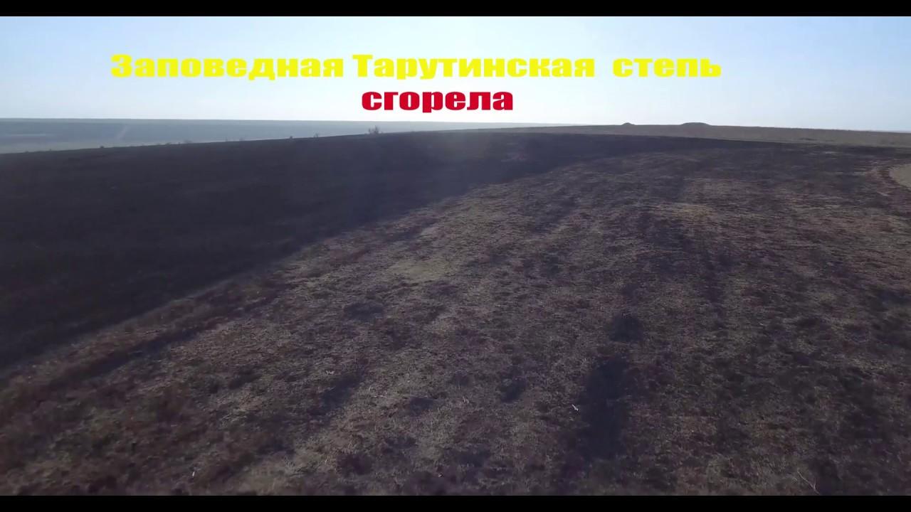 Заповедная Тарутинская степь сгорела