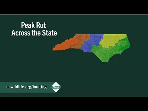 Peak Of The Rut Across North Carolina