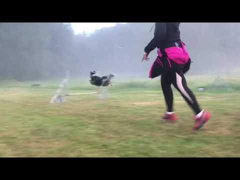 Wonder agility basics