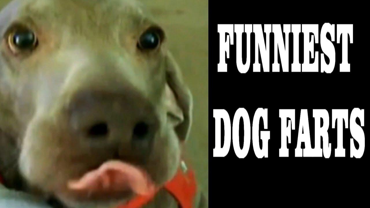 Watch Dog  Genitals