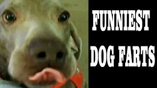 FUNNY DOG FARTS THE ULTIMATE COMPILATION [ NEW HD ]