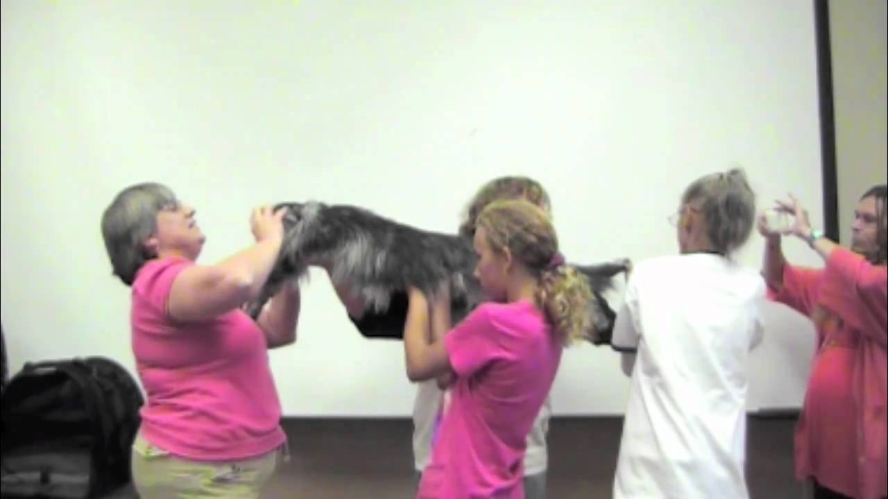 Biggest Cat In The World Guinness 2015 Worldu0027s Longest Cat   Guinness World  Record (tm