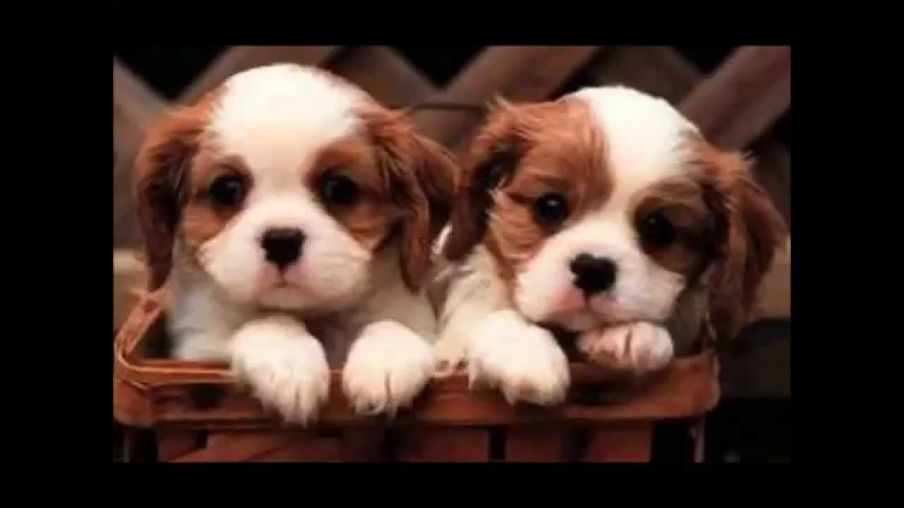 very cute photos of puppies and kittens