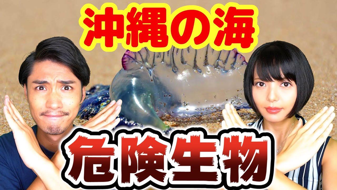 ダイバーが選ぶ海の危険生物ランキング5!【沖縄】THE MOST DANGEROUS ANIMALS