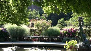 Central Park, Summer 2011 (Goldfrapp - Hairy Trees)