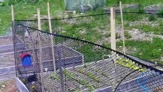 Fencing Ideas For Raised Bed Gardens