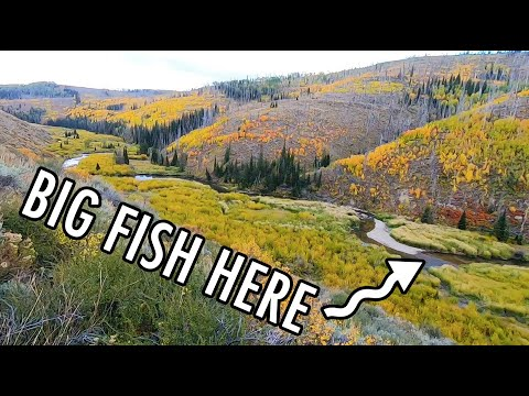 The Little Creek With Big Fish! (Tenkara Fly Fishing)