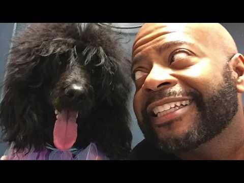 Man's Best Friend: Miss Breaden Lee Serendipity - The Standard Poodle