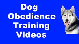 Dog Training Online - Best Dog Training Methods & Tips