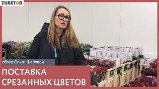 Обзор поставки срезанных цветов на 8 декабря с Ольгой Шаровой