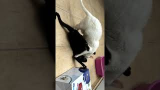Gato gay abusa de irmão adotivo.