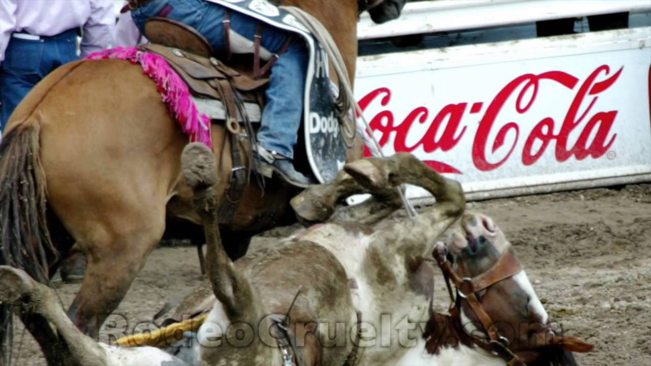 the misunderstanding of the sport of rodeo as an animal abuse Rodeo where to begin its a crazy, as well as a crazy competitive sport your competition, animal and human alike, have little to no fear rodeo bangs the hell out of you on each and every go.