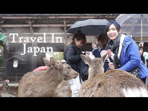 京阪神自由行 神戶、奈良、京都玩什麼?