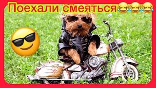 СМЕШНЫЕ ЖИВОТНЫЕ 2021 ПРИКОЛЫ КОТЫ СОБАКИ ЛУЧШИЕ ПРИКОЛЫ с Кошками и Собаками Funny Cats 5