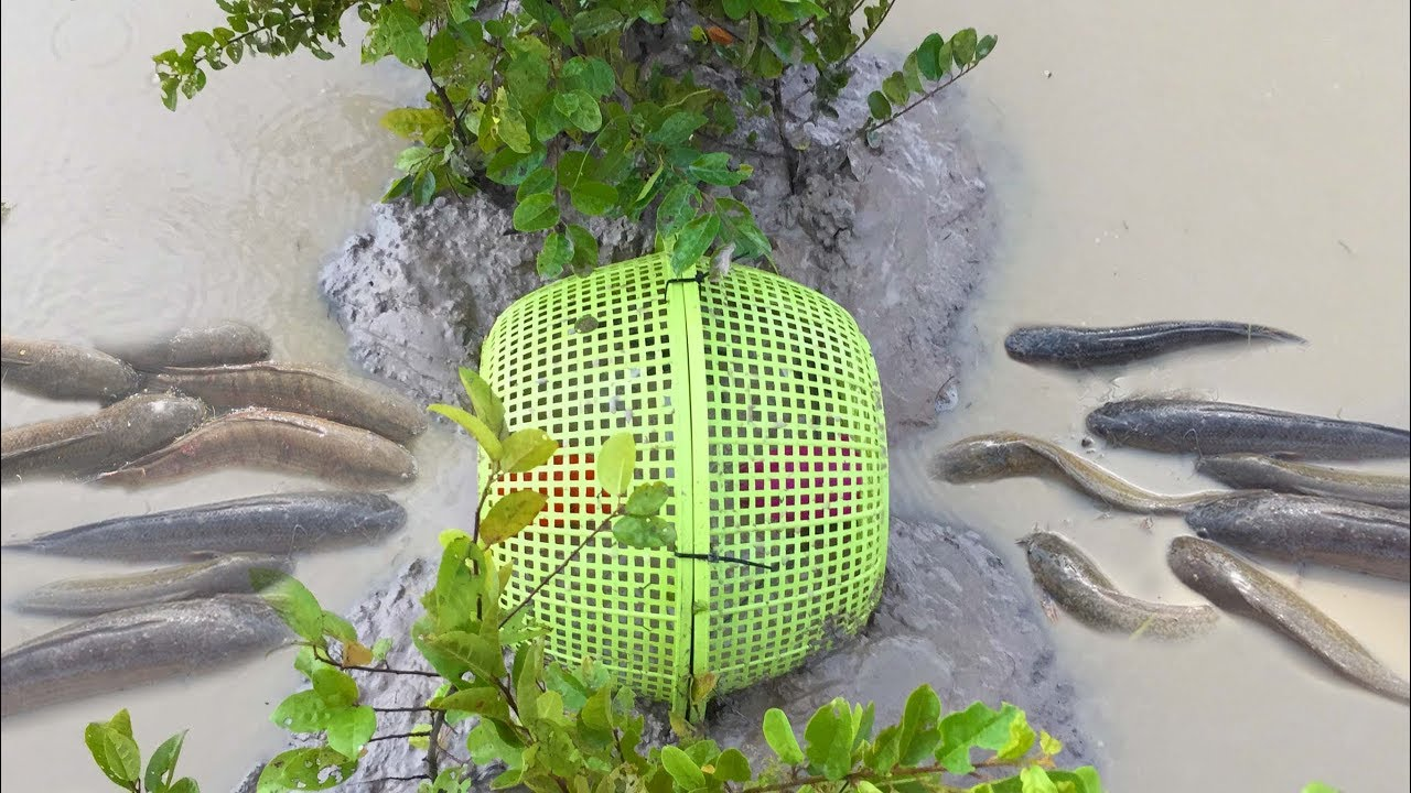 Amazing Man Make Fish Trap Using Basket And old plastic glass To Fishing get Alot of Fish