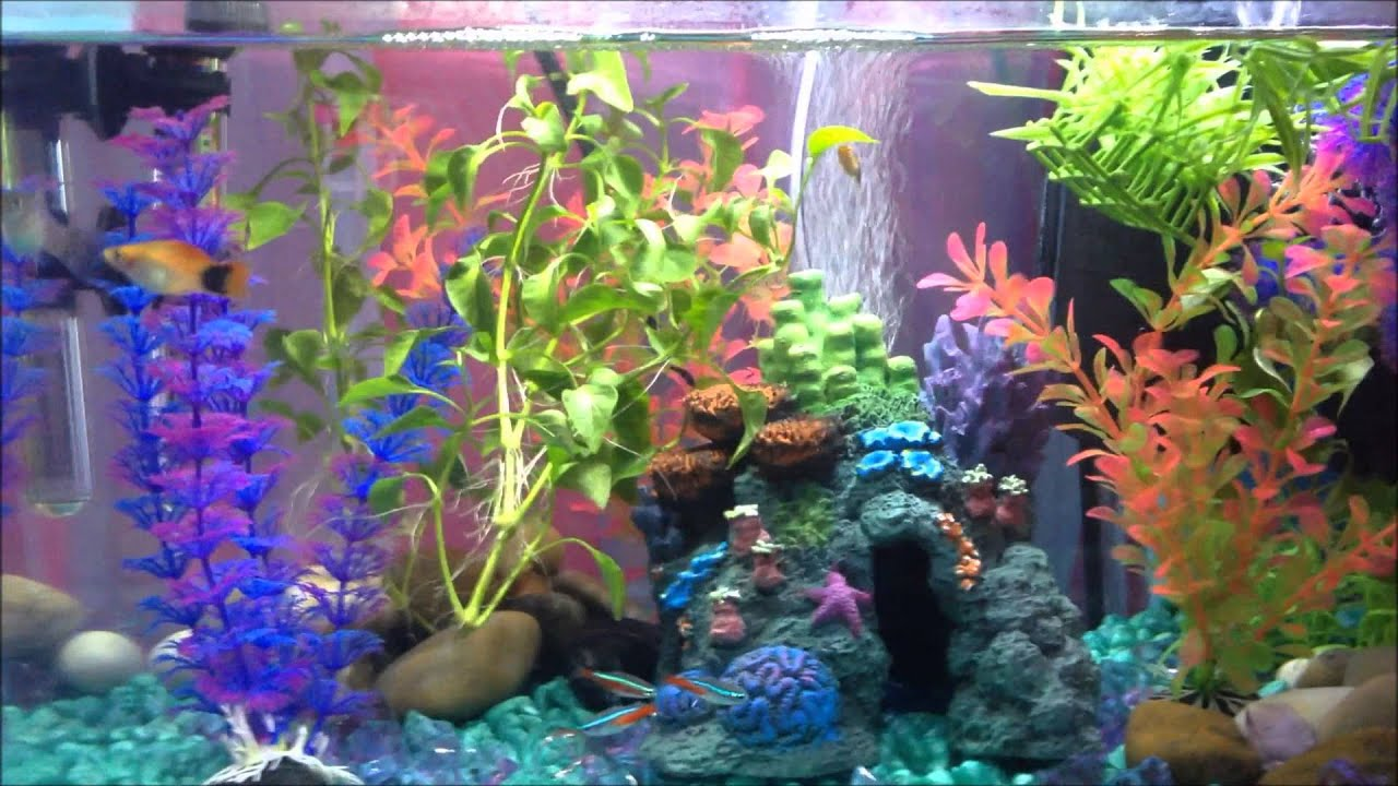 How To Keep ICH PLETELY Gone From Your Fish Tank