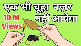 चूहे आपके घर से रास्ता भूल जायेंगे। घर को  देखने से भी डरेंगे। chuhe bhagane ka tarika।rat repellant