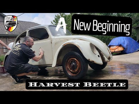 A New Beginning for the Harvest Beetle!