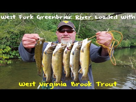 Trout Fishing West Virginia's West Fork Greenbrier River