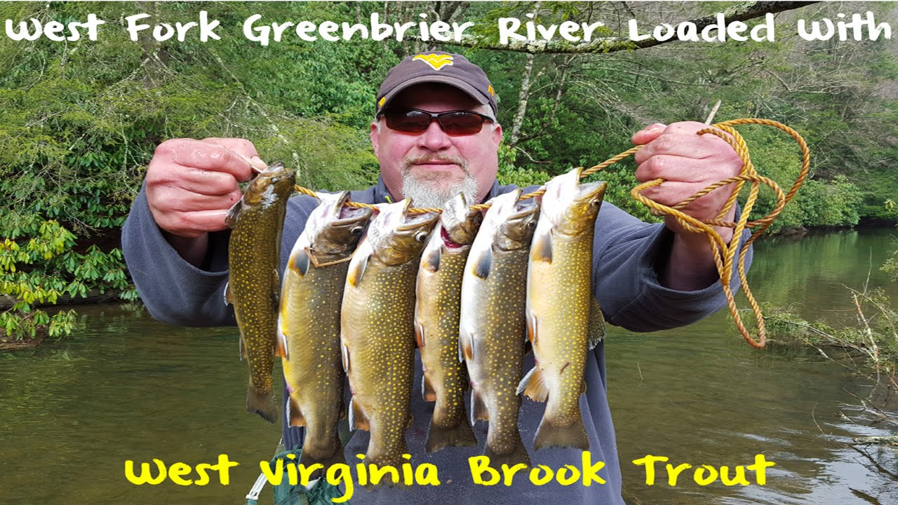 Trout fishing west virginia 39 s west fork greenbrier river for Trout fishing in wv