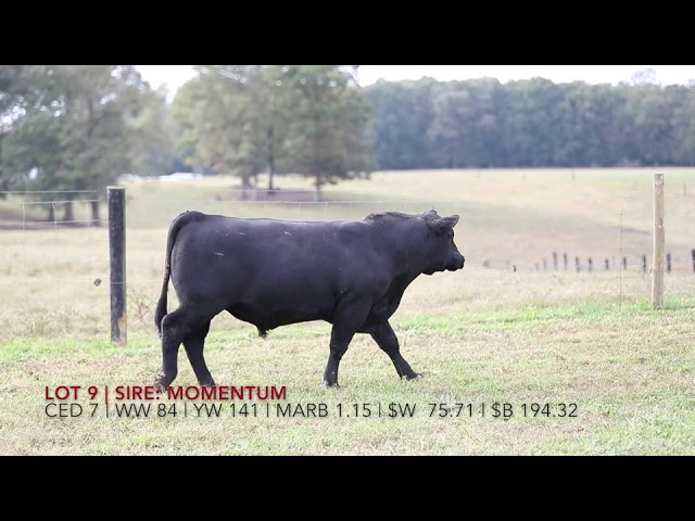 Edgewood Angus Lot 9