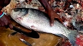 Carp Catla Fish Cutting | Fastest Catla catla Fish Cutting | Big Carp Fish Cutting Videos