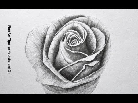 drawing-flowers:-how-to-draw-a-rose-with-pencil---fine-art-tips.