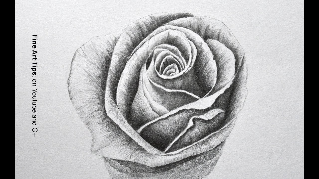 Drawing flowers how to draw a rose with pencil fine art tips youtube