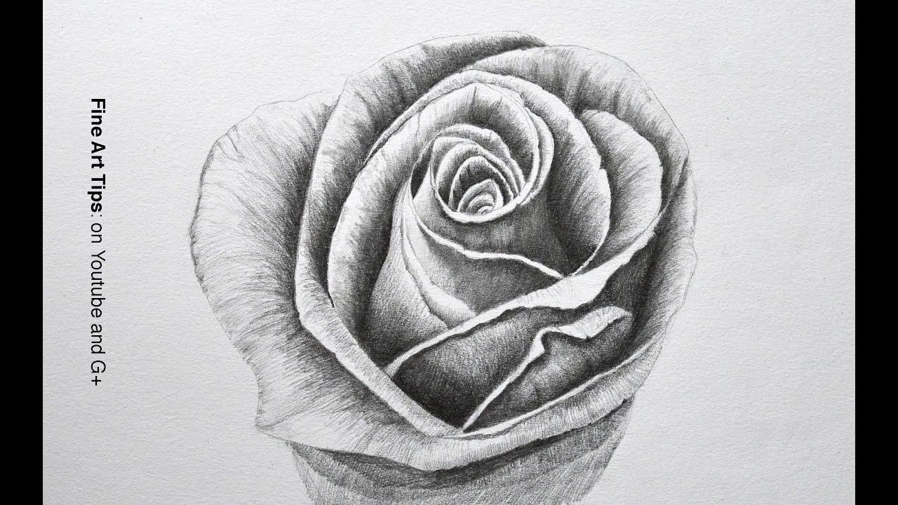 knumathise: Realistic Black And White Rose Drawing Images