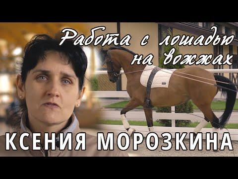 Ксения Морозкина. Работа с лошадью на вожжах.