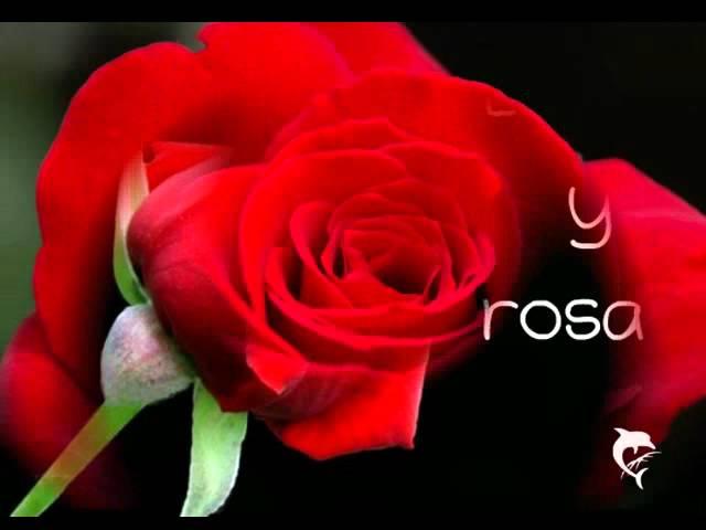Farias- Espina y rosa Live a