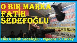 Gambar cover O Bir Marka, Fatih Sedefoğlu. Çeyrek Yüzyıllık Tecrübe. Güvercin Piyasasının Pirleri. Çayırova Güver