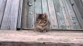 Отдам котенка кошечка, возраст 2 месяца. Красноярск