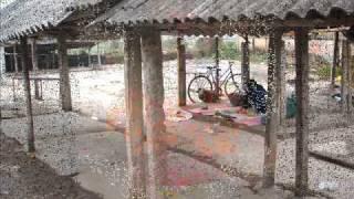 Video Mùa ổi-Pham Trung Kiên-mc Trần Thiện Tùng.wmv download MP3, 3GP, MP4, WEBM, AVI, FLV November 2017