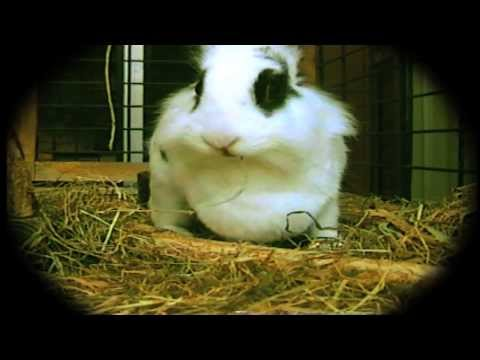 Gotch (後藤正文)『Wonderland / 不思議の国』Music Video